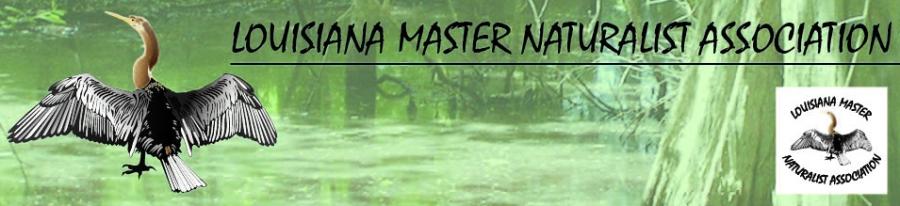 LMNA web banner